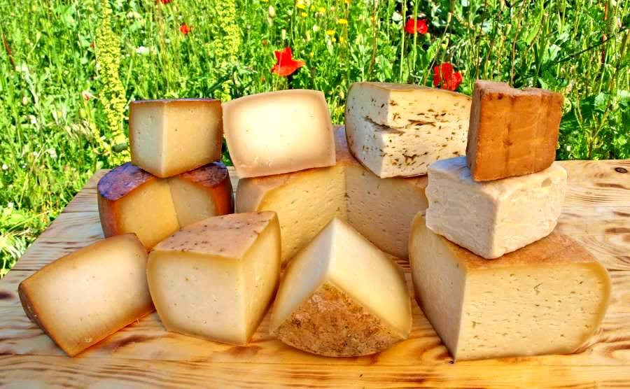 Die Käsevielfalt Dank Käse selbst machen.